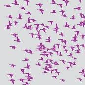 Rrflock_birds_cropped_shop_thumb