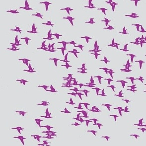flock_birds purple