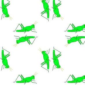 vll_viginia_s_grasshopper_square