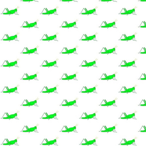 vll_virginia_s_grasshopper_stripe_horizontal