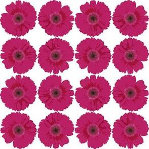 pink_gerbera_daisies (large)