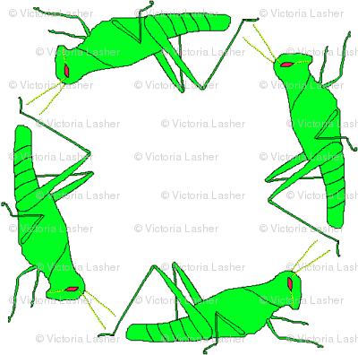 vll_virginia_s_grasshopper_check