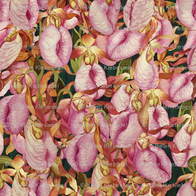 Moccasin Flower Field
