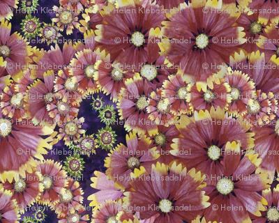 Spiral Flower Field