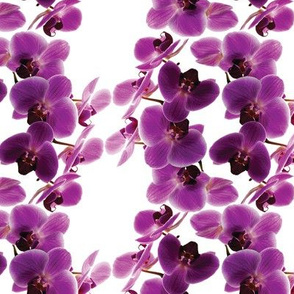 flower_dna_-_orchid