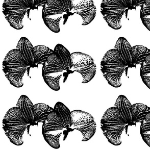 flowers_orchid_black_ink_inverse_single