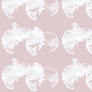 flowers_orchid_pink_haze_ink_single
