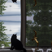 black cat & brass gull