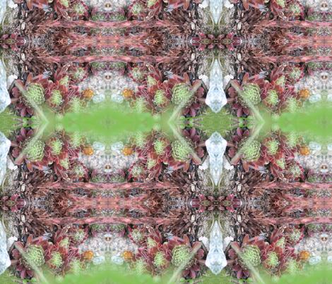 hens & chicks fabric by pinkchamplain on Spoonflower - custom fabric
