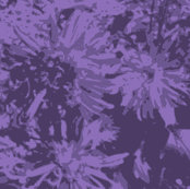 Rtone-on-tone_purple_asters_9_24_07_005_ch_shop_thumb