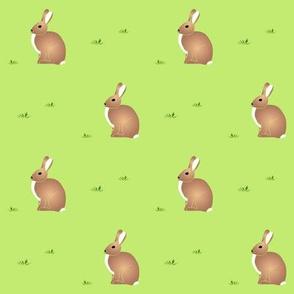 Cottontail Rabbit - Purpleibis