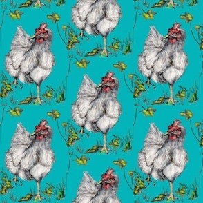 rooster_looks_for_road