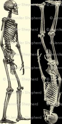 SkeleStripe