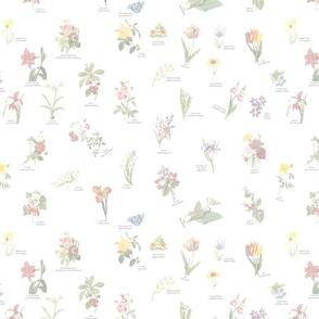 floral01_pale