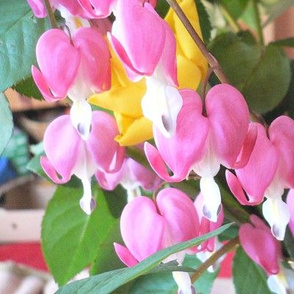 Springflower in Pink