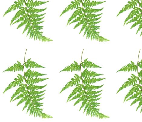 Palapalai fabric by leilehua on Spoonflower - custom fabric