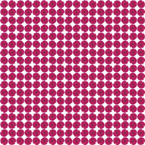 pink_gerbera_daisies_(small)