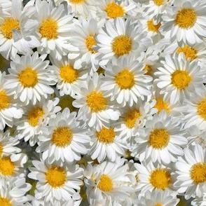 Daisy Fabric Wallpaper Gift Wrap