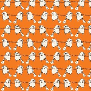 birdfight orange