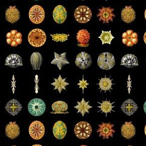 Haeckel Microscopic Life