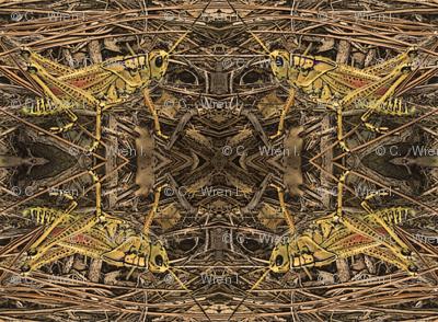 grasshopper-egypt500