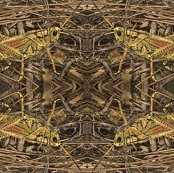 Rgrasshopper-egypt1000_shop_thumb