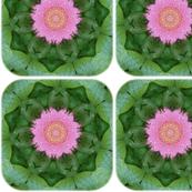 primrose-kaleidoscope