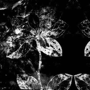 Wall Flower 5