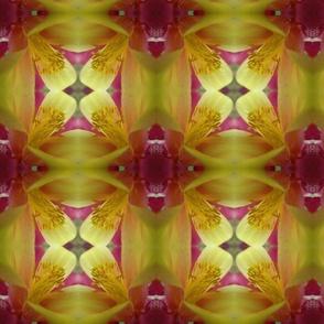 citrusmacroflower9129