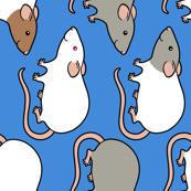Cute rats #edited