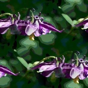 Amethyst colombine