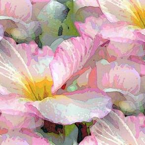 Powder pink primrose
