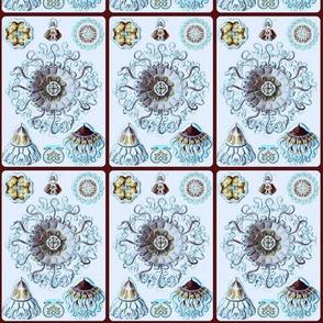 Haeckel Plate 38