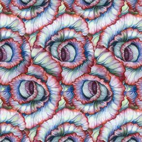 Spiral Cabbage