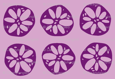 lotus root - purple