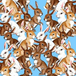 Bunnies Galore