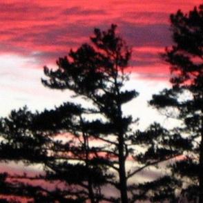 pine sunset mirror repeat