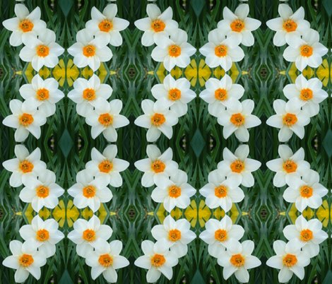 Rcrop_1g_daffodils_shop_preview