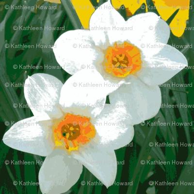Light Daffodils D-11