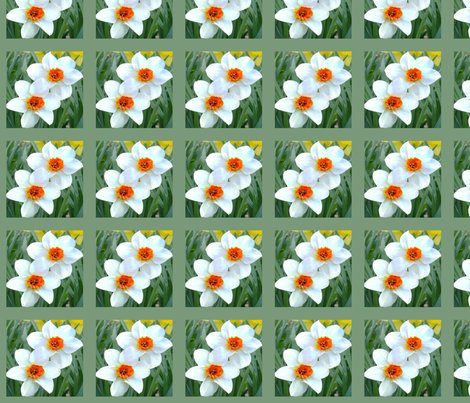 Runsharp_flowers_lighten_back_crop_daffodils-2007_002_ed_ed_ed_ed_ed_shop_preview
