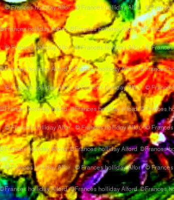 Mirrored Daffodils