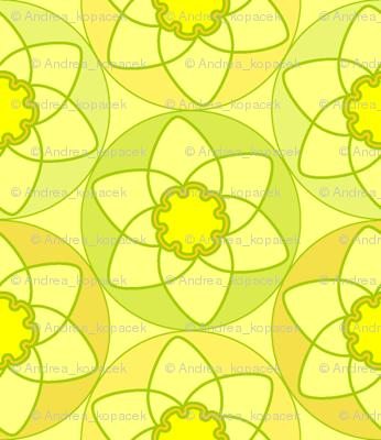 Circle Daffodils