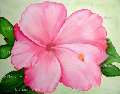 Hand Painted Hibiscus