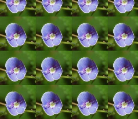 Lavender flower fabric by ingermaaike on Spoonflower - custom fabric