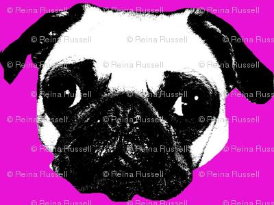 Pug in Fuchsia