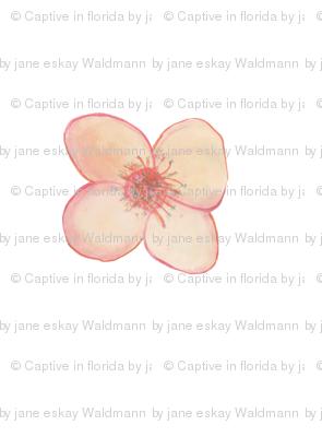 Flower for Spoonflower II