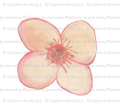 Flower for Spoonflower