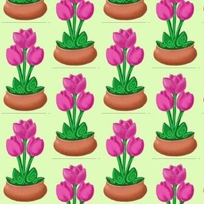 tulipwithterracotta