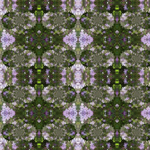 plant_lilac_1a