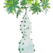 Rcestlaviv_cactustree_spf_shop_thumb